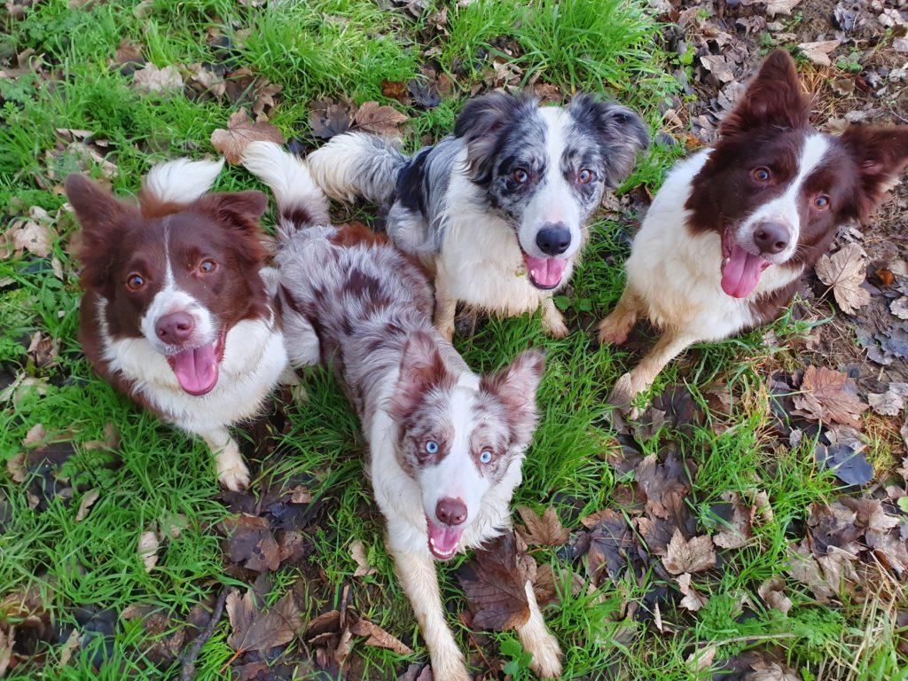Jill Spurr's dogs